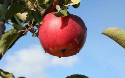 Les cidres de la famille Simard: C'est bien plus que du jus de pomme